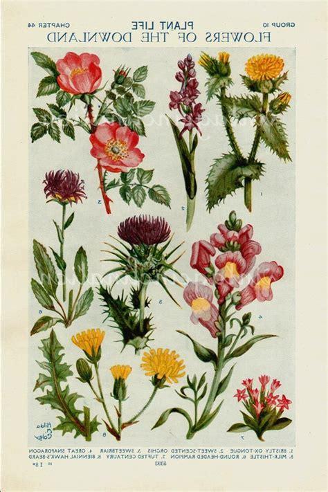 flower encyclopedia top 28 flower encyclopedia vintage encyclopedia illustration flowers flower encyclopedia