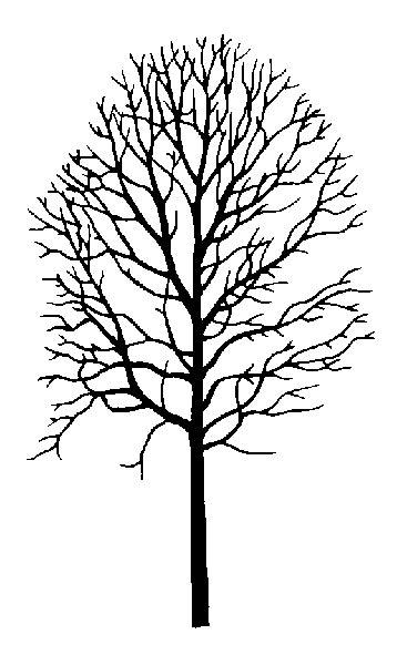 aspen forest silhouette light largetooth aspen
