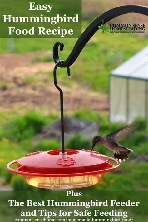 homemade hummingbird food recipe and the best hummingbird