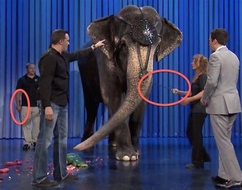 images  boycott  circus zoos  sea