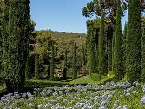 Mediterrane Pflanzen Winterhart : wann sind s ulenzypressen winterhart standort pflege und gestaltung ~ Frokenaadalensverden.com Haus und Dekorationen