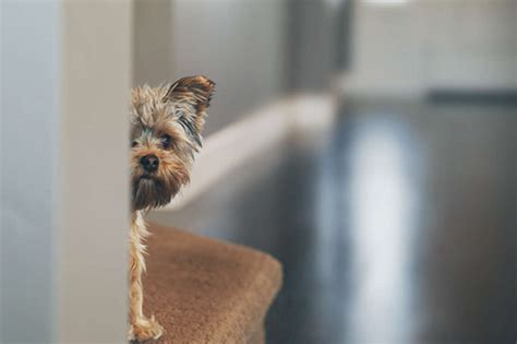 dogs  suffer  anxiety disorders