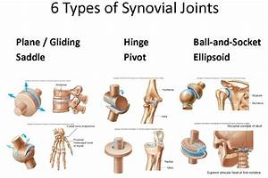 Where Are Synovial Joints Found