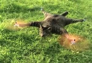 cat quadcopter artist turns his dead cat into quadrotor helicopter the