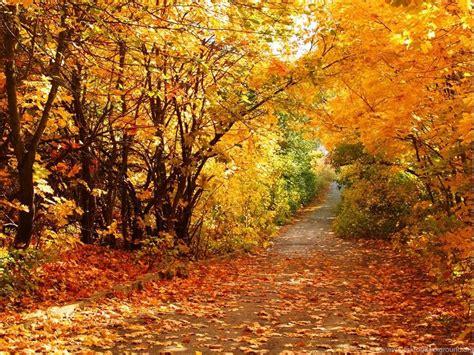 Autumn Animal Wallpaper - autumn scenery wallpapers wallpapers animal hd