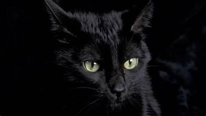 Cat Wallpapers Cats Kitten Eyes Iphone Ipad