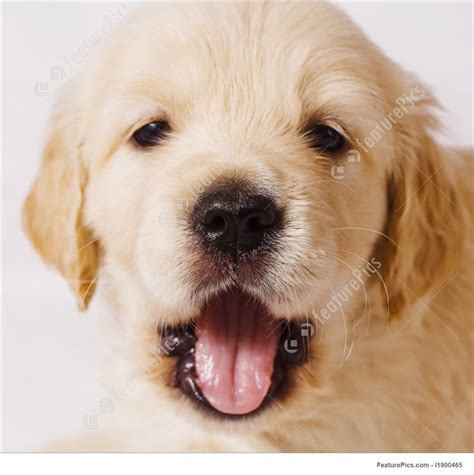 when do puppies open image of puppy with open mouth
