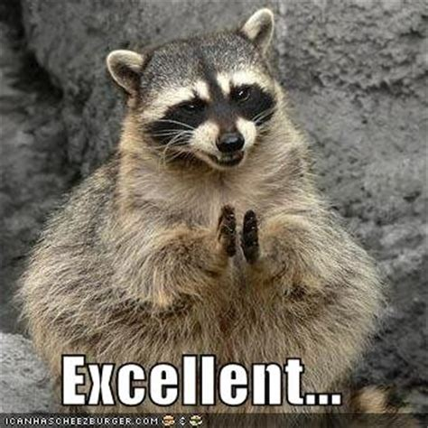 Excellent Raccoon Meme - evil raccoon excellent bing images