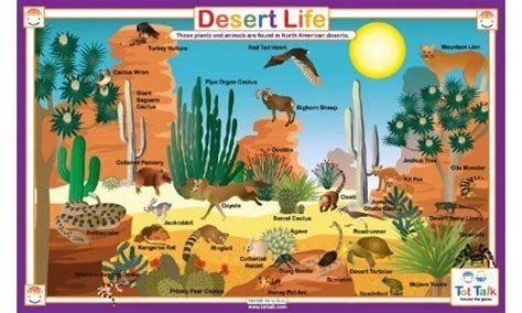 1000+ Images About Desert Crafts For Kids On Pinterest