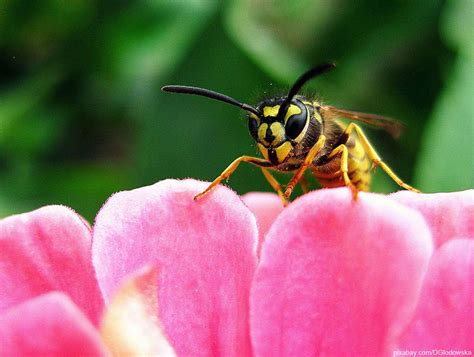 Wespen Vertreiben Hausmittel wespen hausmittel vertreiben wohn design