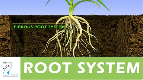 Names Of Modified Roots by Root System
