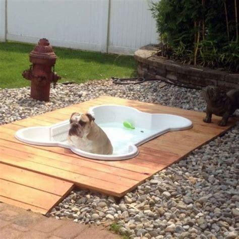 apprendre a toiletter chien piscine pour chien en forme d os