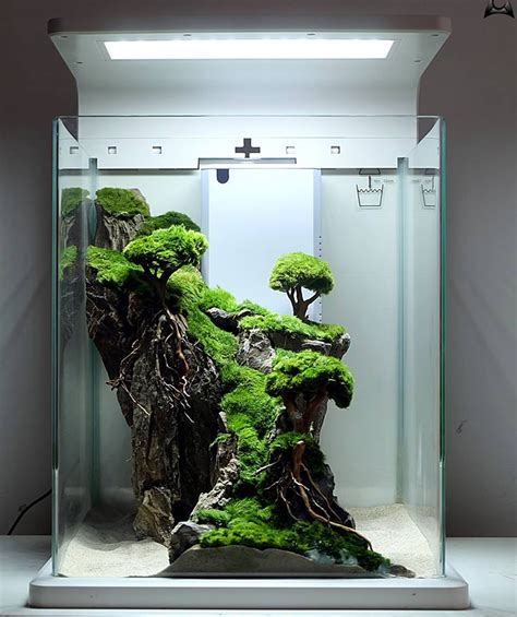 aquascape nano tank ideas aquascape paludarium blog