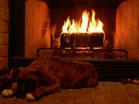 dogs for fireplaces print photos view size image