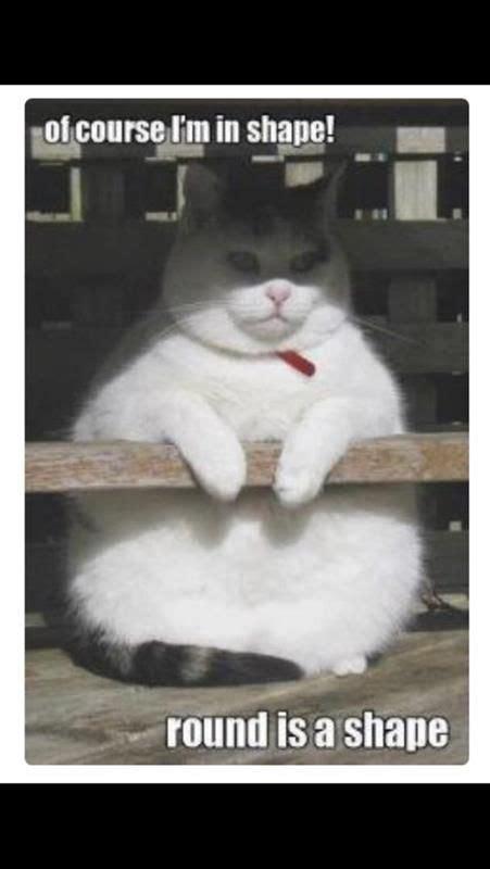 fat cat shape image humor satire parody mod db