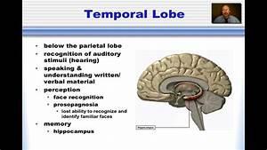Occipital Lobe - Lessons