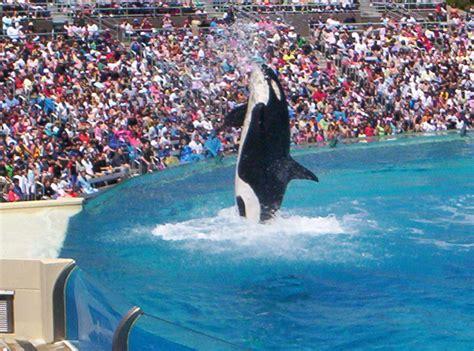 File Orca Sea World San Diego Wikipedia