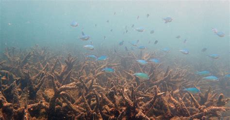 reef barrier coral australia gbr corals ever northern