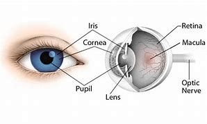 High quality images for iris eye diagram 63android0 hd wallpapers iris eye diagram ccuart Choice Image
