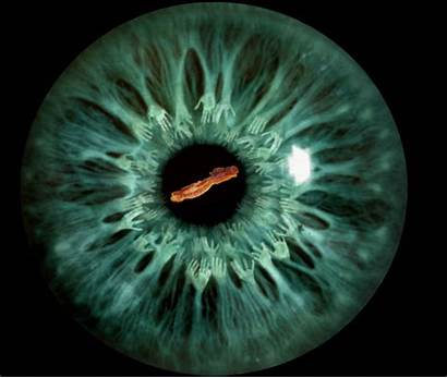 Gifs Animated Trip Eye Eyes Iris Dragon
