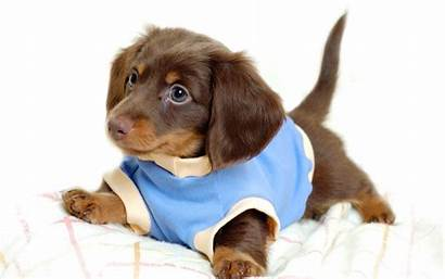 Puppy Wallpapers Backgrounds Puppies Dog Dogs Desktop