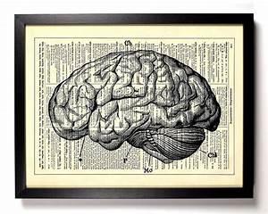 Anatomy Brain Human Anatomy Antique Book Art by StayGoldMedia