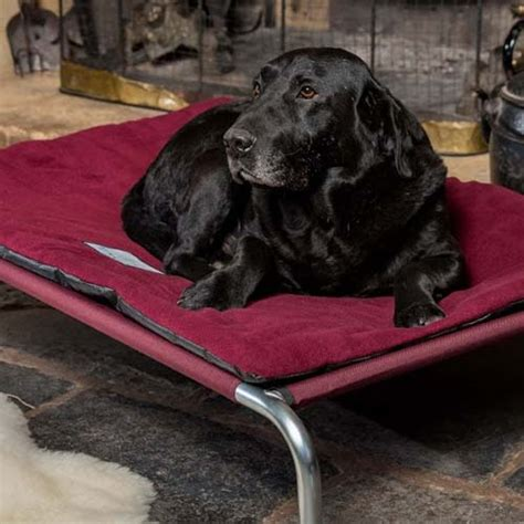 high quality raised dog bed bundle  included