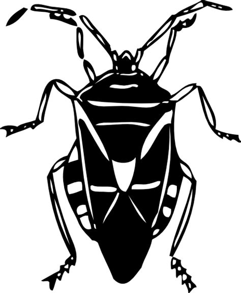 beetle clipart black and white bug clip at clker vector clip