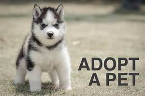 Find your next ... Dogs For Adoption