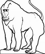 Baboon Coloring Printable Drawings 14kb 700px sketch template