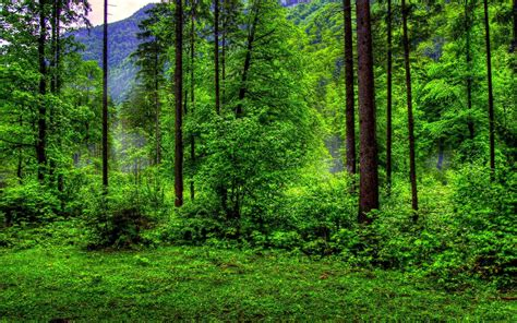 Free Green Forest Background by Forest Wallpapers Free Ololoshenka Forest Wallpaper