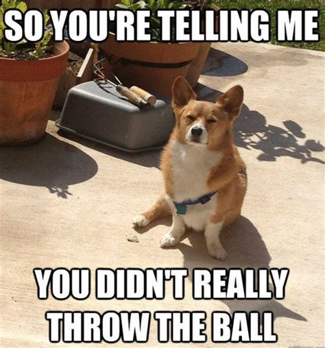 Corgi Puppy Meme - 25 best ideas about corgi meme on pinterest funny puppies puppy meme and funny dog humor