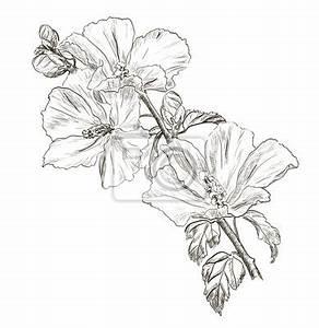 tableau dessin a la main fleur d39hibiscus o posters et With chambre bébé design avec fleur d hibiscus tisane