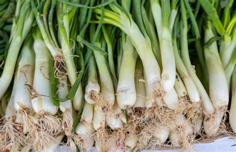 Fresh Organic Green Onion For Sale At Farmers Market Stock ...