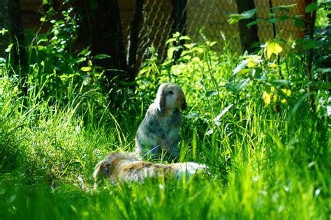 freilandhaltung kaninchenhilfe deutschland ev aktiv
