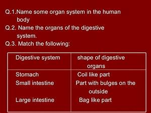Human Digestive System Science