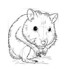 hamster zeichnen lernen schritt fuer schritt tutorial
