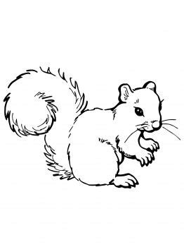 coloring pages squirrels - Google Search | Squirrel
