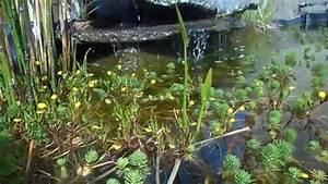 Bassin De Terrasse : bassin sur terrasse youtube ~ Premium-room.com Idées de Décoration