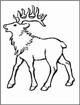 Coloring Elk Alce Colorear Mountain Rocky Animals Pintar Imprimir Colorir Printable Desenhos Animales Clipart Gritando Sheet Desenho Deer Bull Clip sketch template