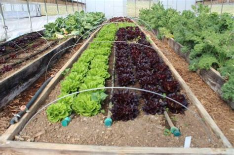 garden watering system diy watering system for vegetable or flower gardens
