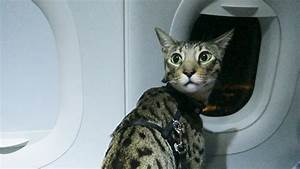 CATS ON A PLANE - YouTube