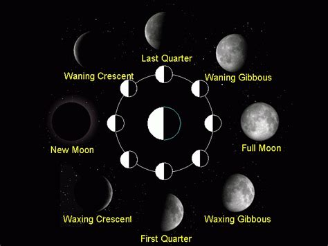 moon phases in order new calendar template site