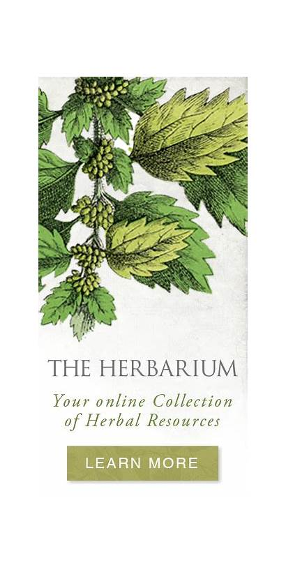 Herbal Herbarium Plant Resources Trimming Herb Tea