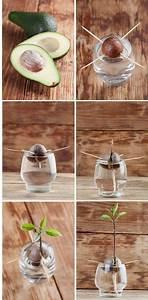 Pflanzen Bewässern Mit Plastikflasche : die besten 25 pflanzen ideen auf pinterest pflanze pflanzen gie en und avocado pflanze ~ Markanthonyermac.com Haus und Dekorationen