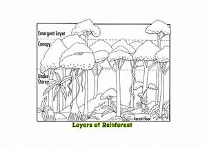 Printables  Layers Of The Rainforest Worksheet
