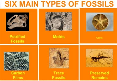 Fossil And Fossil Fuel Quiz Tuesday