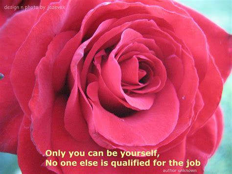cute roses  red quotes quotesgram