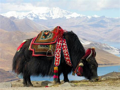 An Introduction To Mongolian Food, From Yaks To Yurts