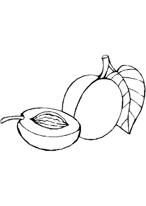 apricot coloring pages    print